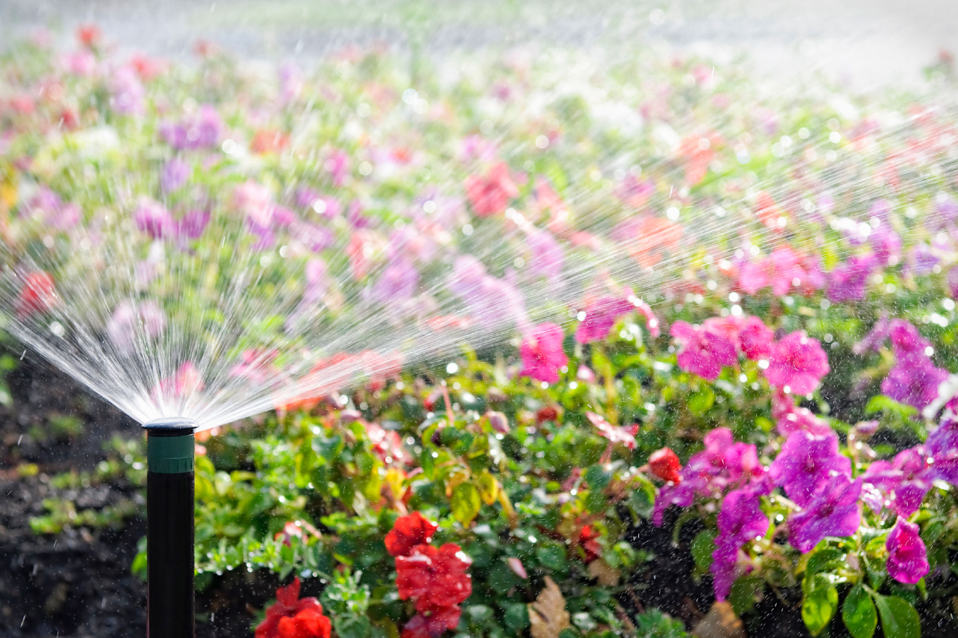Sprinkler System Check Up Irrigation Systems Lawn
